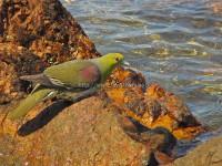 海岸の鳥達