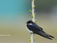 干拓地の鳥