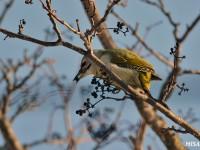 北海道の小鳥いろいろ
