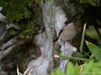 囀る小鳥たち