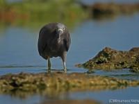 海岸の水鳥たち