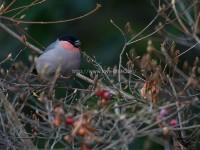 奈良のヤング探鳥会の日の小鳥たち