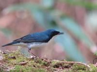 亜高山の野鳥たち