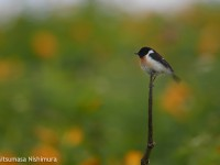 高原の鳥たち